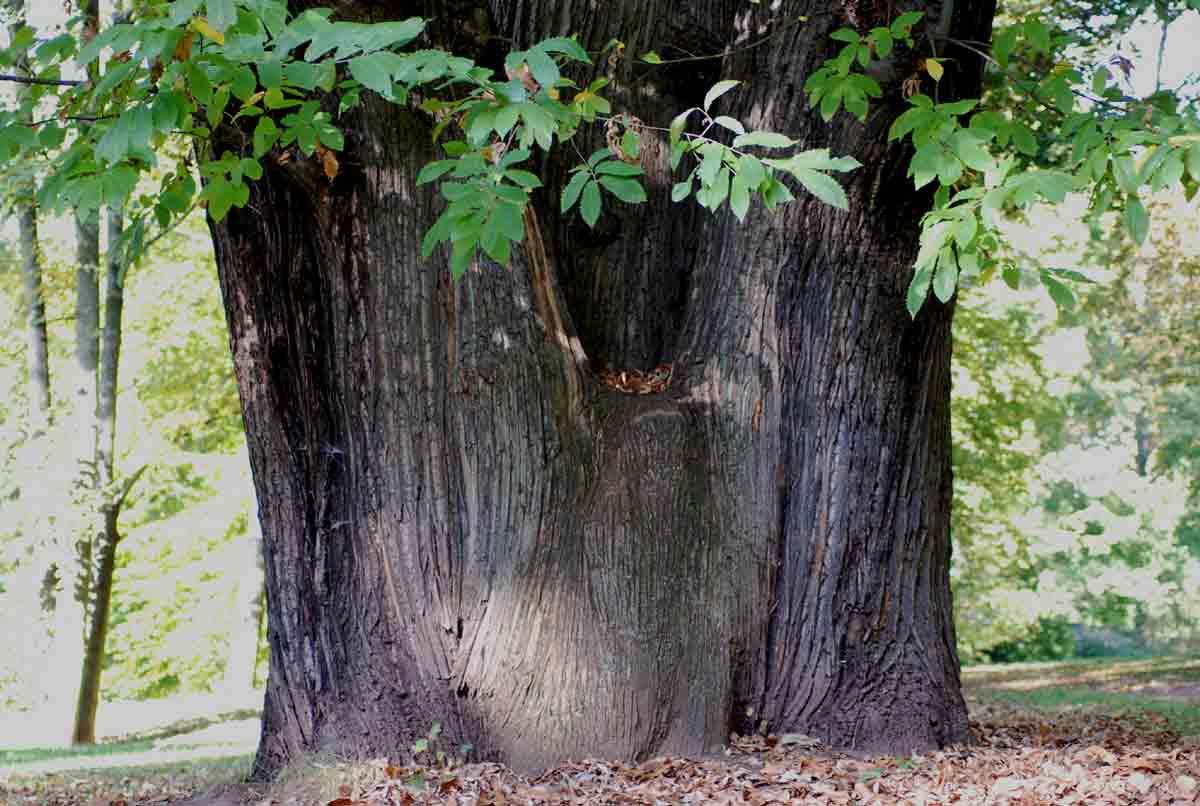 bäume förderverein park rosenhöhe e.v., Garten und Bauen